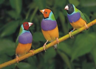 Vogelshow en modelbaan